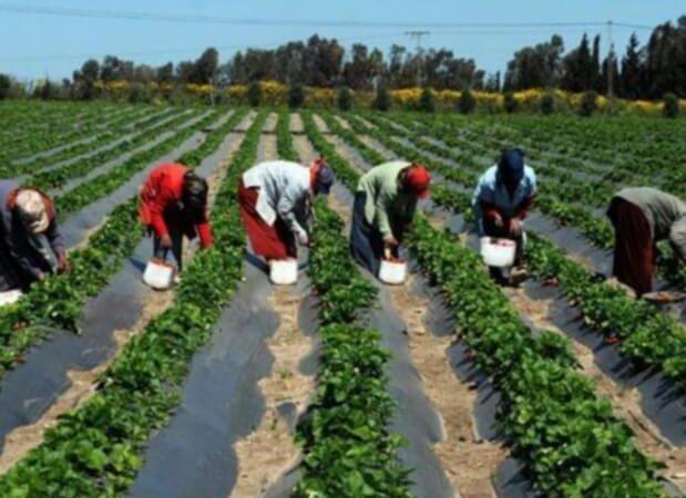 Casamance: La BAD approuve l'agropole Sud