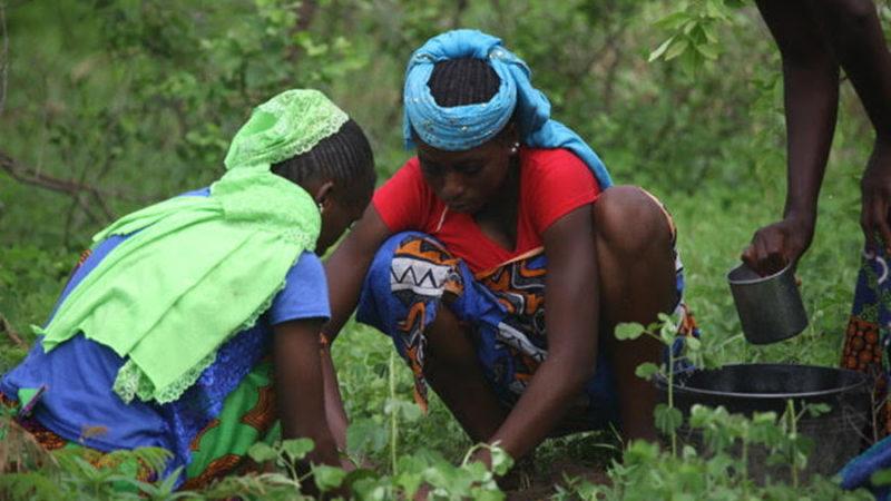 UCAD : Un poumon vert à 8000 arbres avec une charte pour l'environnement